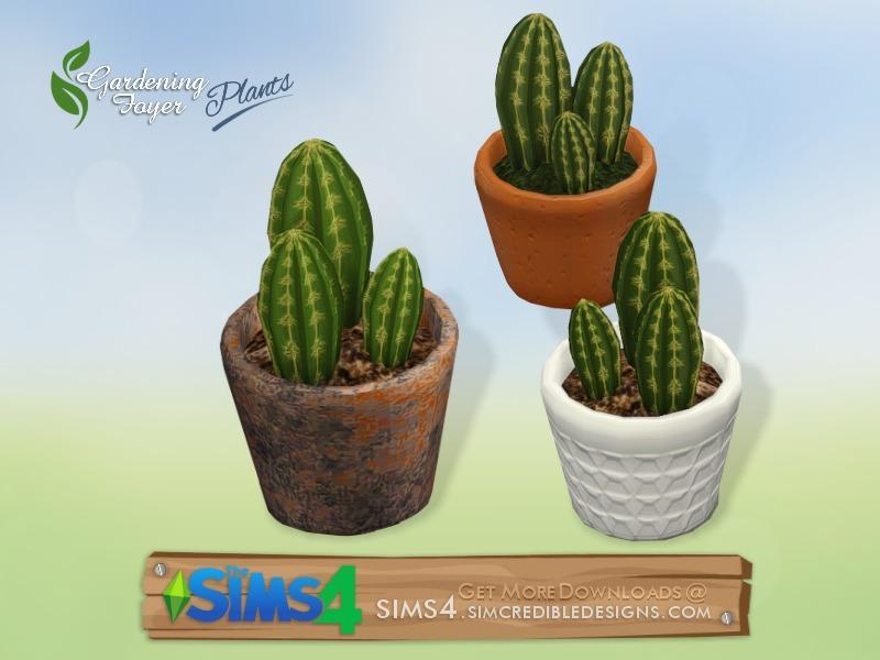Gardening Foyer plants - cactus