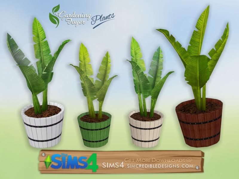 Gardening Foyer plants - potted banana leaves