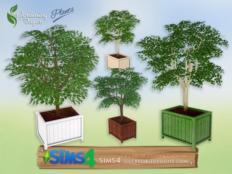 Gardening Foyer plants - potted tree